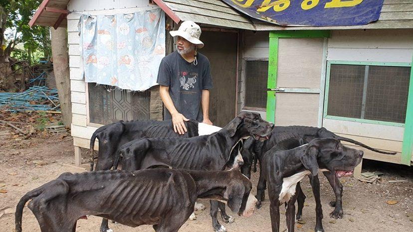 ข่าวจังหวัดปทุมธานี ข่าวสดวันนี้ สุนัขพันธุ์เกรทเดน