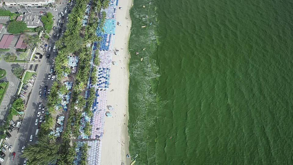 ข่าวสดวันนี้ น้ำทะเลสีเขียว บางแสน แพลงก์ตอนบลูม