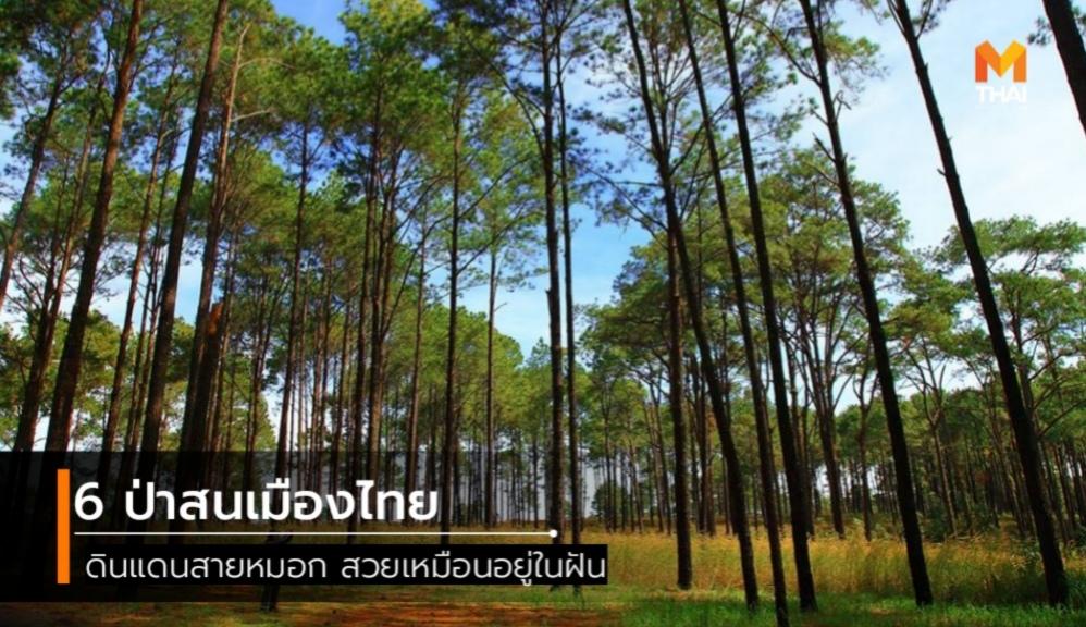 ถนนเลียบหาดสวนสน ทุ่งนางพญา ปางอุ๋ง ป่าสนวัดจันทร์ ป่าสนเมืองไทย ภูสอยดาว เที่ยวธรรมชาติ