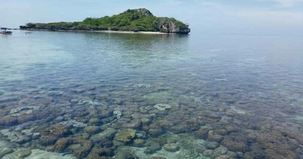 ข่าวสดวันนี้ เกาะจาน เกาะท้ายทรีย์