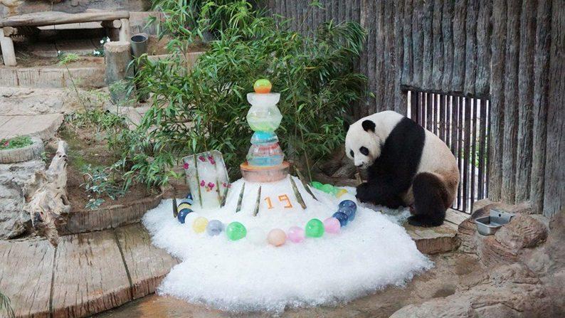 ข่าวสดวันนี้ ช่วง ช่วง สวนสัตว์เชียงใหม่ หมีแพนด้า