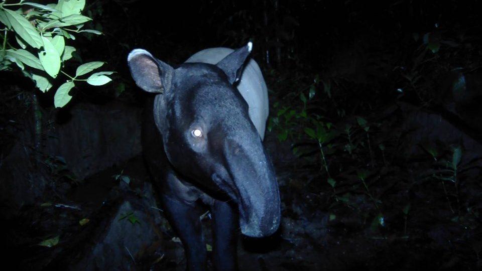 ข่าวสดวันนี้ สมเสร็จ สัตว์ป่าสงวน อุทยานแห่งชาติลำคลองงู