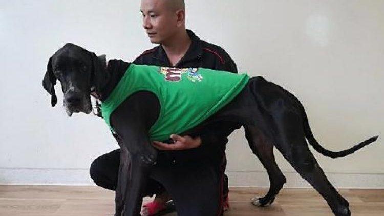 ข่าวสดวันนี้ สุนัขพันธ์เกรทเดน