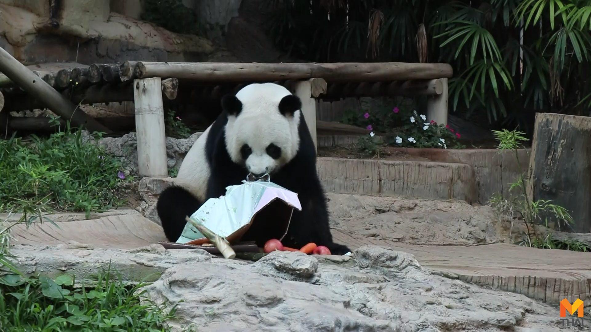 ช่วงช่วง ช่วงช่วงตายแล้ว ช่วงช่วงหลินฮุ่ย สวนสัตว์เชียงใหม่
