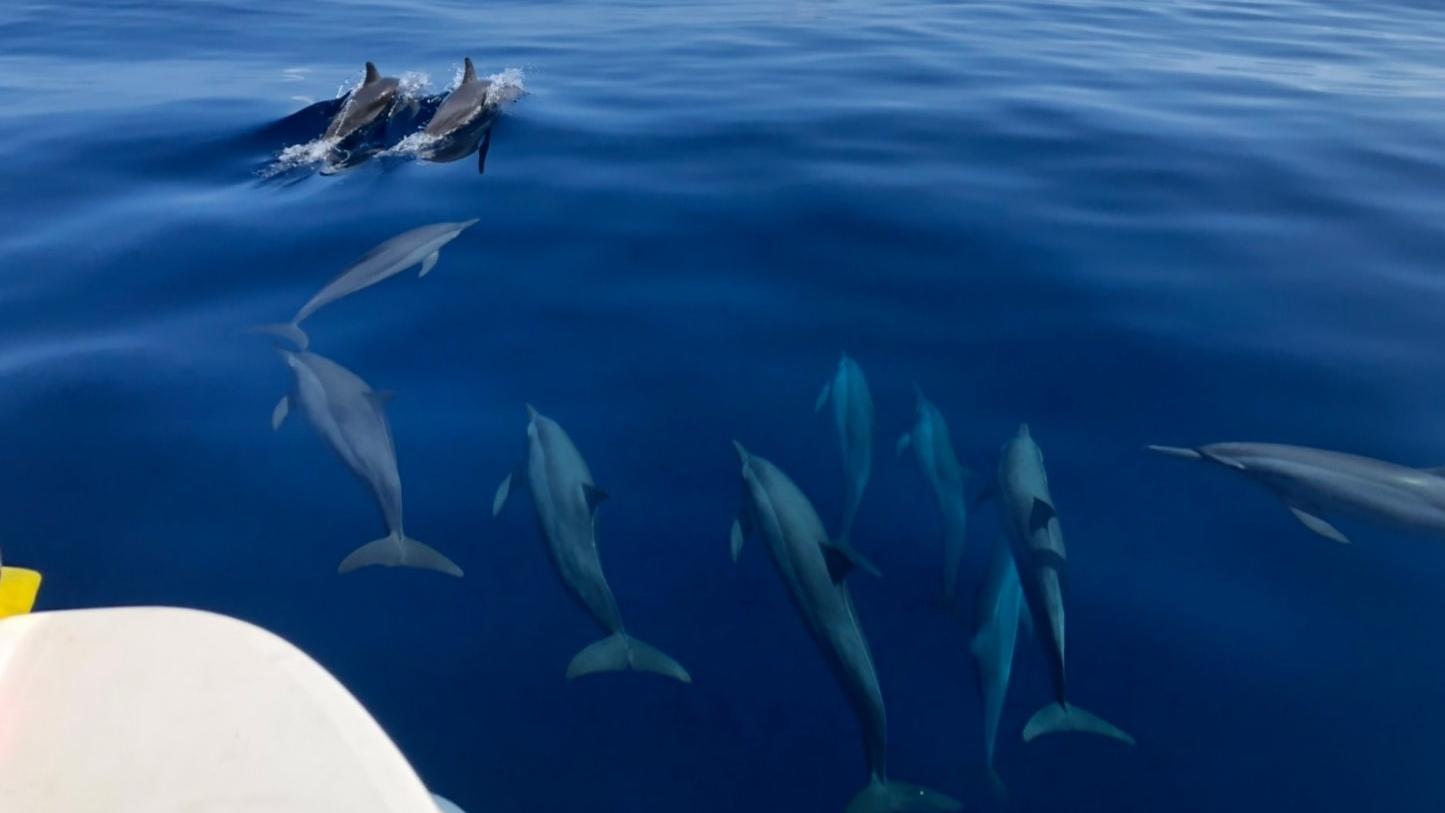 อุทยานแห่งชาติหมู่เกาะตะรุเตา เกาะสิมิลัน โลมา