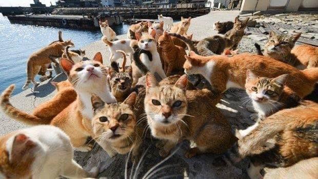เกาะแมว แมว