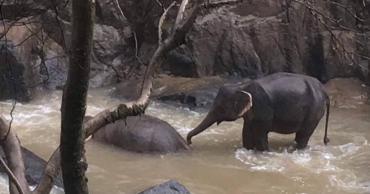 ข่าวสดวันนี้ ช้างตกเหว เหวนรก