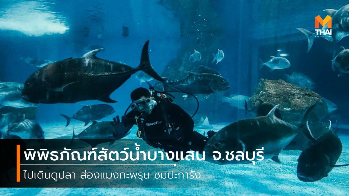 ที่เที่ยวชลบุรี ที่เที่ยวบางแสน บางแสน พิพิธภัณฑ์สัตว์น้ำ พิพิธภัณฑ์สัตว์น้ำบางแสน สถาบันวิทยาศาสตร์ทางทะเล อควาเรียม เที่ยวชลบุรี เที่ยวบางแสน