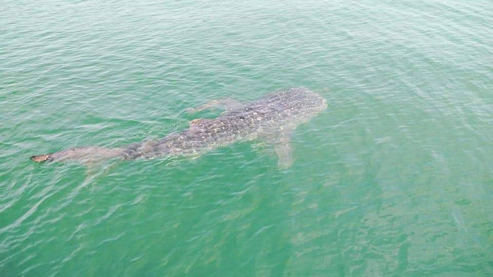 ข่าวจังหวัดประจวบคีรีขันธ์ ข่าวสดวันนี้ ฉลามวาฬ
