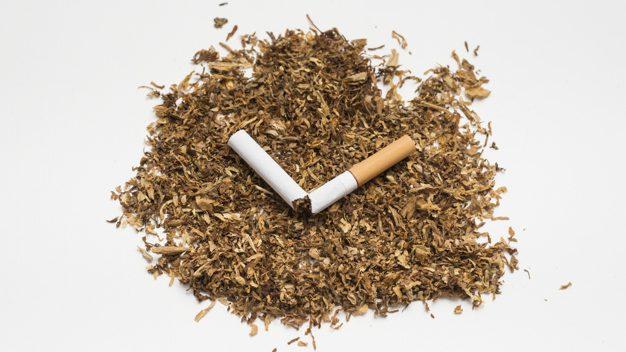 ปลูกยาสูบ ผู้ปลูกยาเส้น ยาเส้น