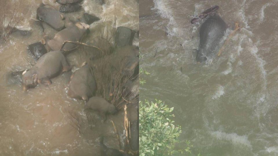ช้าง น้ำตกเหวนรก