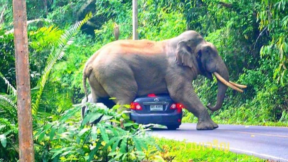 ข่าวสดวันนี้ ช้างป่า อุทยานแห่งชาติเขาใหญ่
