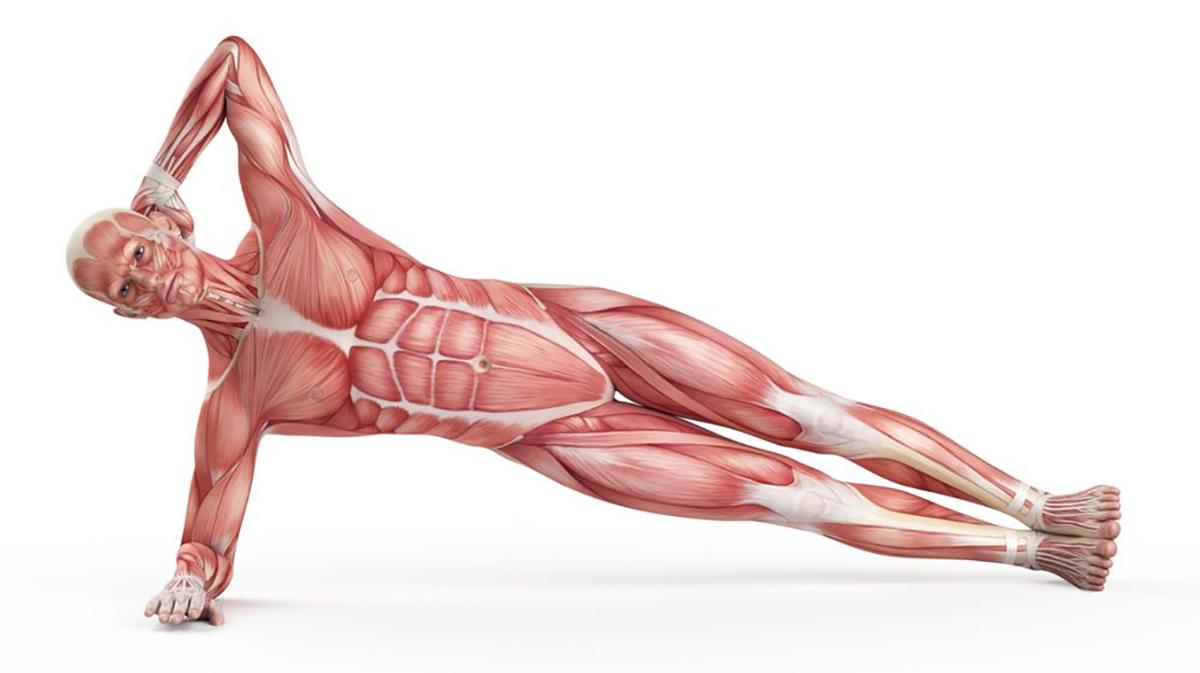 ท่าออกกำลังกาย ท่าออกกำลังกายง่ายๆ บริหารหน้าท้อง ออกกำลังกาย