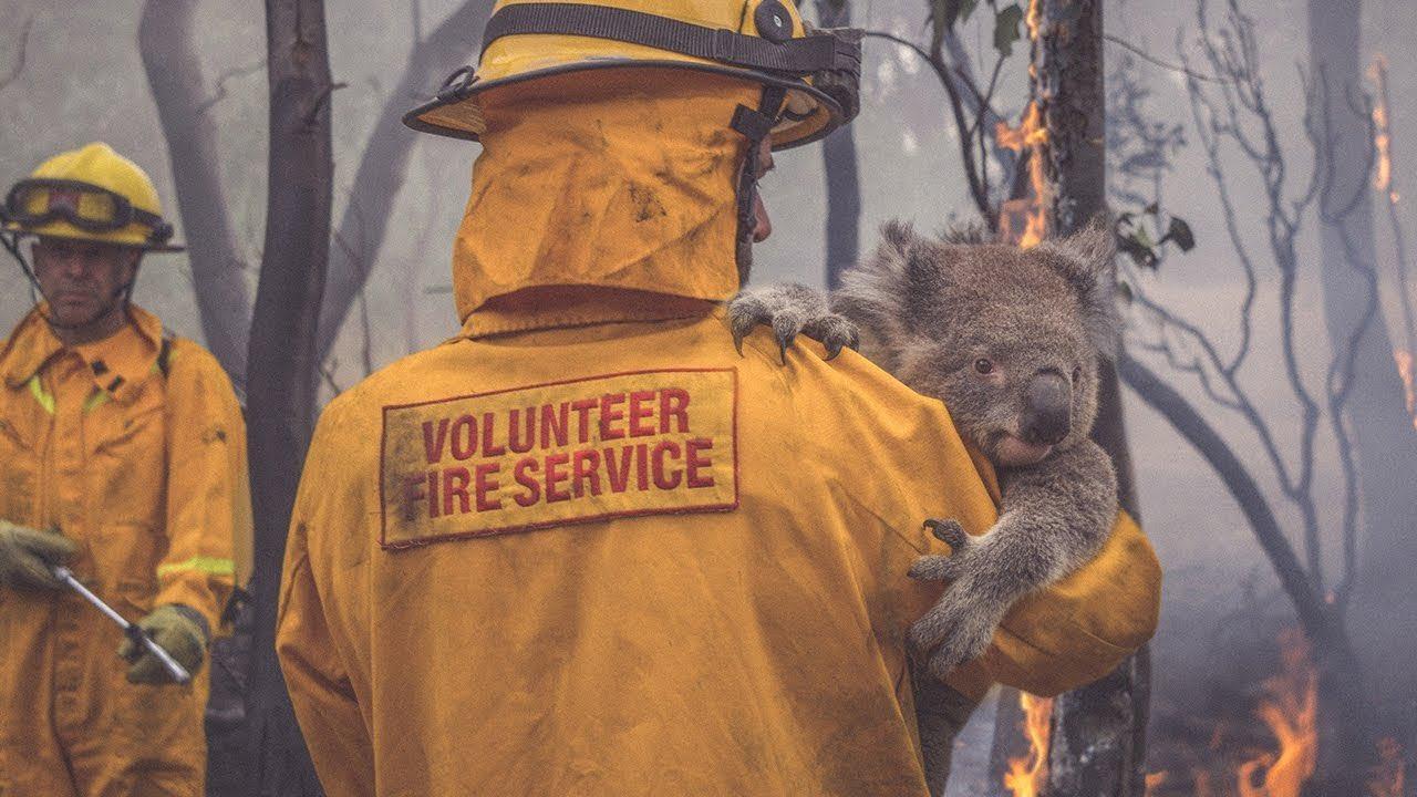 ข่าวสดวันนี้ โคอาลา ไฟป่าออสเตรเลีย