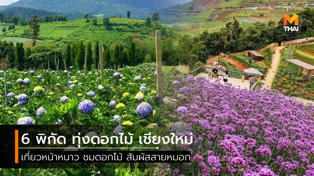 ที่เที่ยวสวนดอกไม้ ที่เที่ยวเชียงใหม่ ทุ่งดอกไม้ ทุ่งดอกไม้ เชียงใหม่ สวนดอกไม้ เที่ยวเชียงใหม่