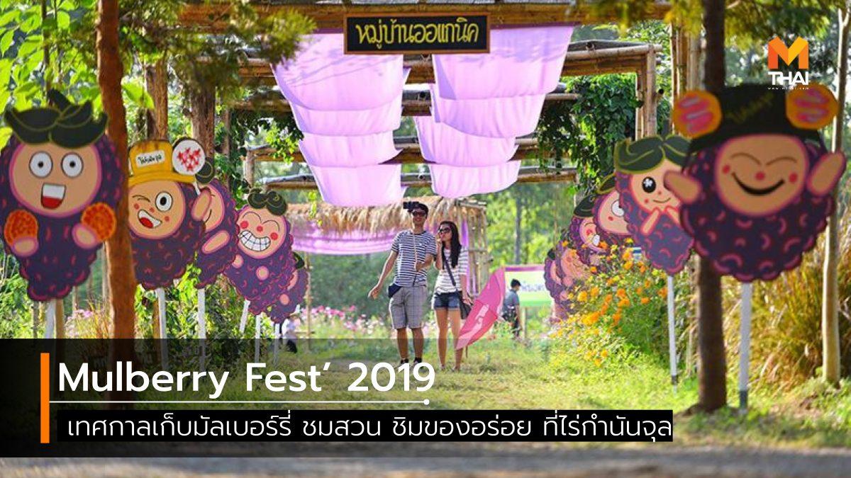 Mulberry Fest' 2019 ที่เที่ยวเพชรบูรณ์ เทศกาลเก็บมัลเบอร์รี่ เที่ยวเพชรบูรณ์ ไร่กำนันจุล