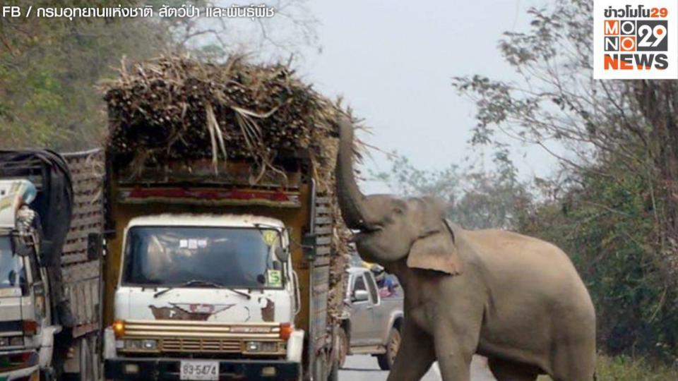 ข่าวสดวันนี้ ช้างป่า เขาอ่างฤาไน