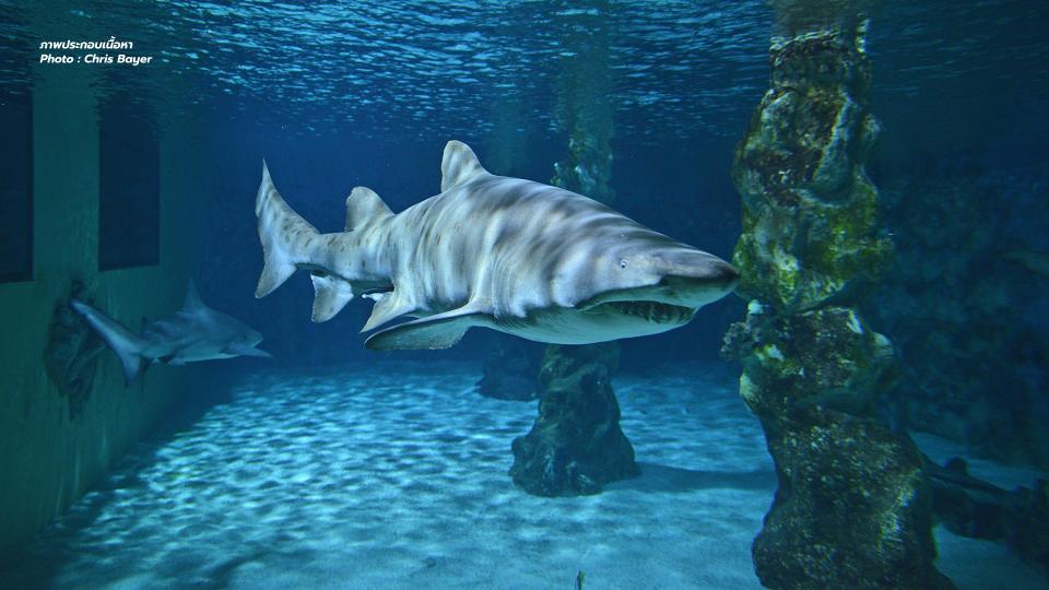 NGO หูฉลาม หูฉลามเทียม หูฉลามไบโอ