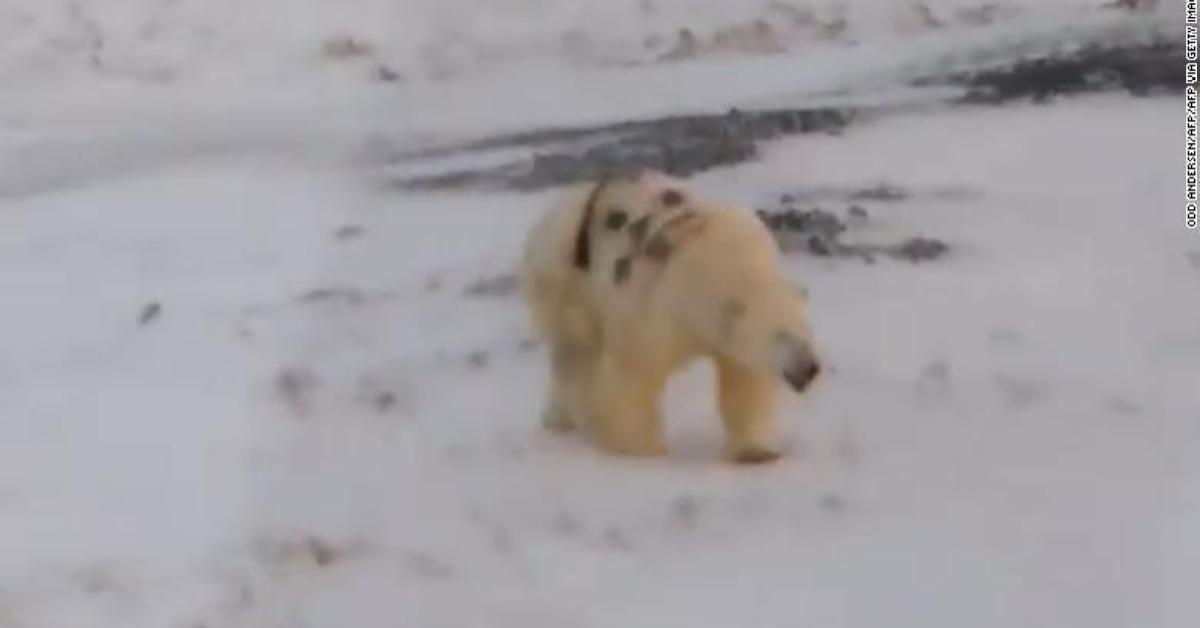 ข่าวสดวันนี้ พ่นสี หมีขั้วโลก