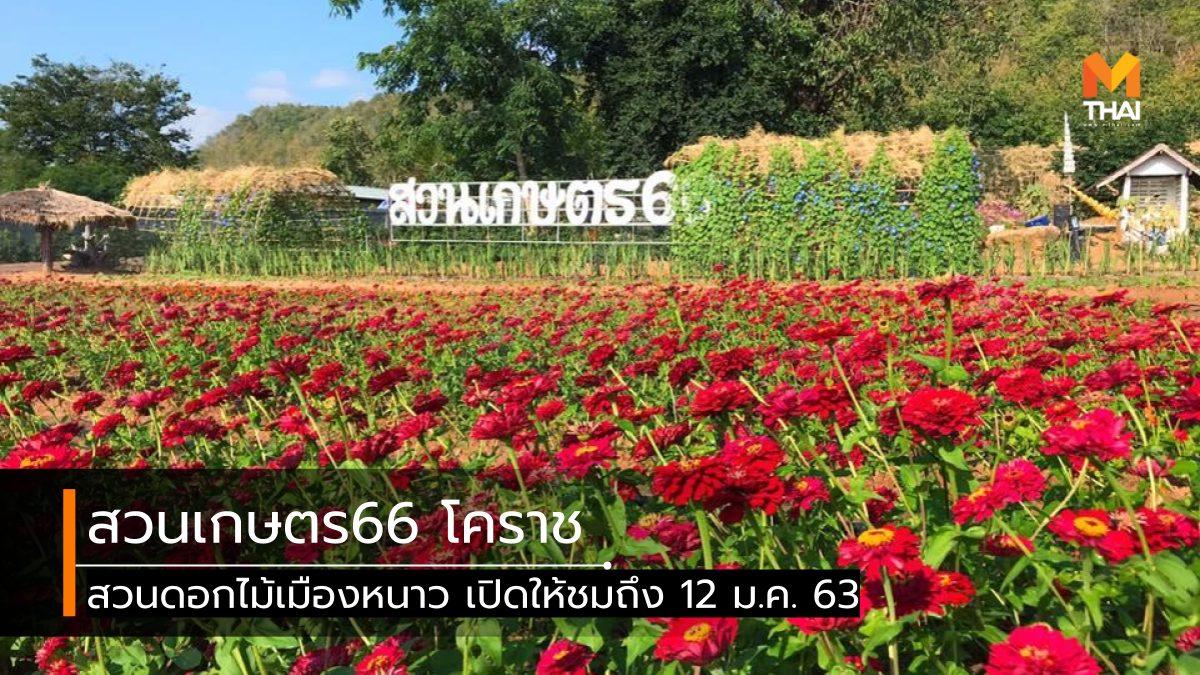 ที่เที่ยวนครราชสีมา ที่เที่ยวโคราช ที่เที่ยวใกล้กรุงเทพ นครราชสีมา สวนดอกไม้ สวนดอกไม้เมืองหนาว สวนเกษตร66 เที่ยวนครราชสีมา เที่ยวโคราช เที่ยวใกล้กรุงเทพ