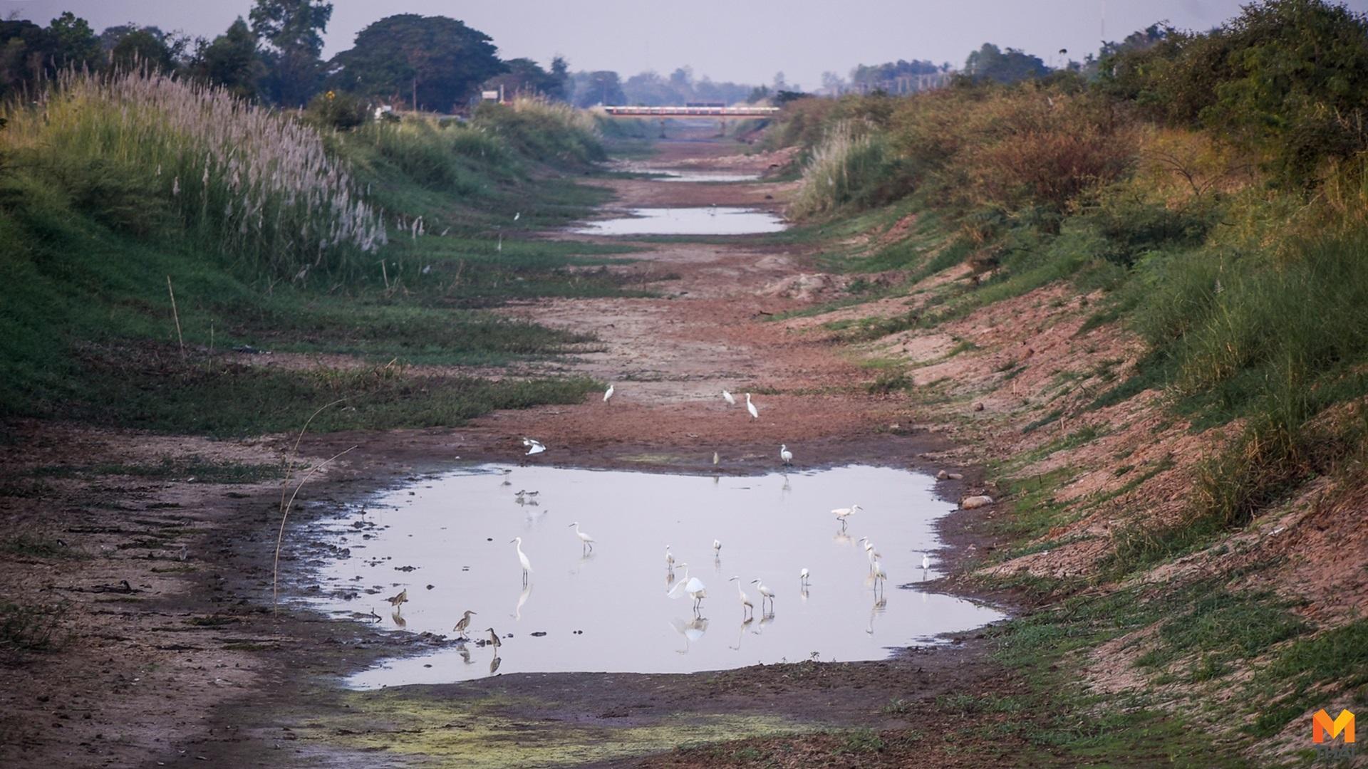 คลองมะขามเฒ่า น้ำแห้งขอด ภัยแล้ง
