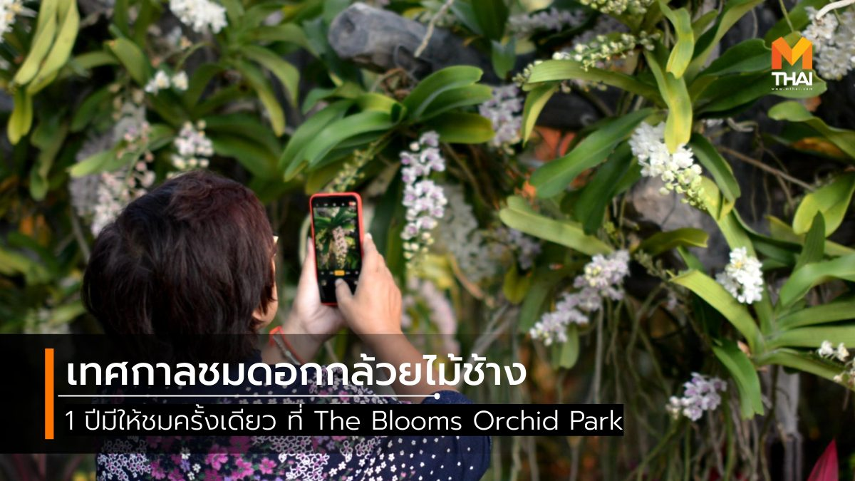 The Blooms Orchid Park ที่เที่ยวราชบุรี อุทยานกล้วยไม้ เทศกาลชมช้าง เที่ยวราชบุรี