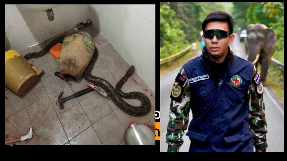 งูรัด งูเหลืิอม สัตวแพทย์