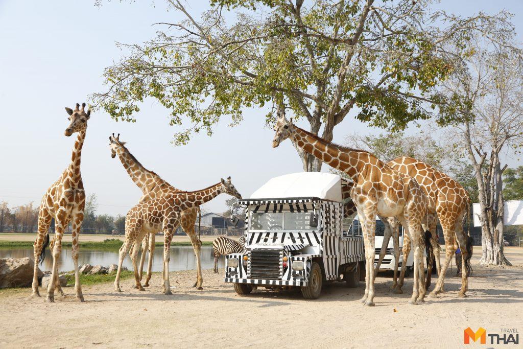 ซาฟารี ปาร์ค แอนด์ แคมป์ ที่เที่ยวกาญจนบุรี สวนสัตว์ สวนสัตว์เปิด ซาฟารี ปาร์ค แอนด์ แคมป์
