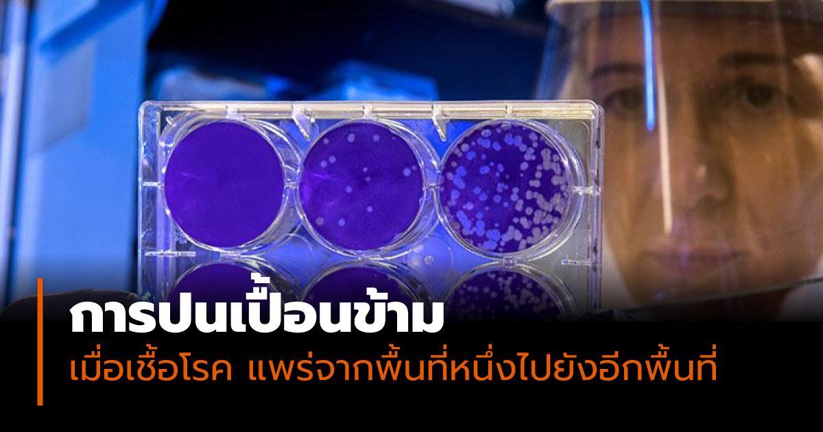 การปนเปื้อนข้าม ไวรัสโคโรนา