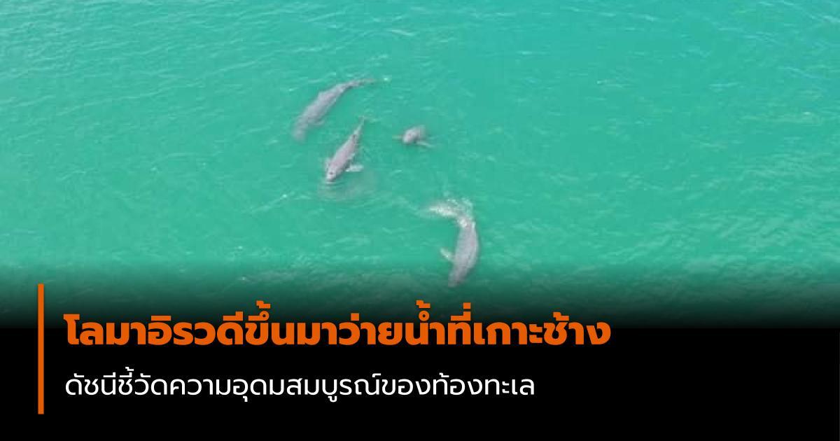 สัตว์ทะเล เกาะช้าง โลมาอิรวดี