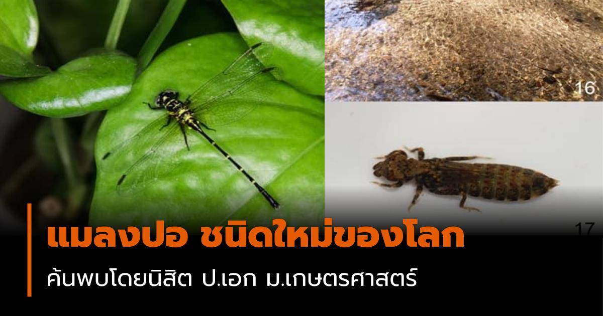 ม.เกษตรศาสตร์ แมลงปอ