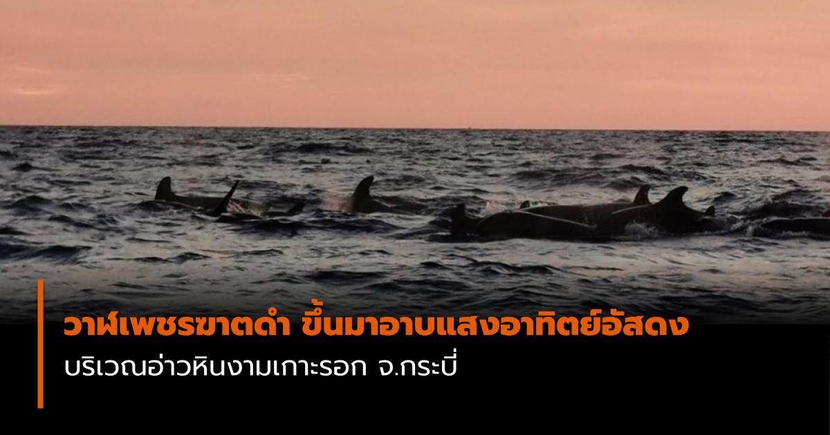 กระบี่ วาฬเพชรฆาตดำ เกาะลันตา