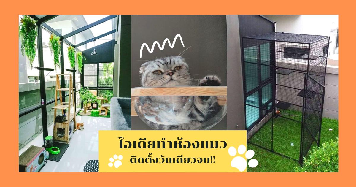 ไอเดียทำห้องแมว