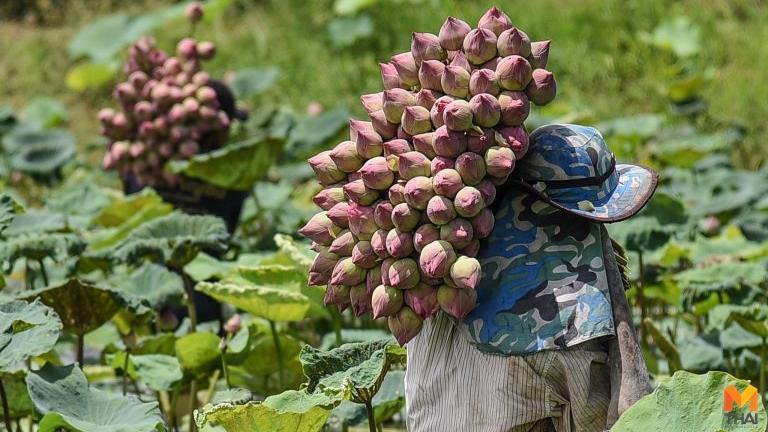 เงินเยียวยาเกษตรกร โควิด-19
