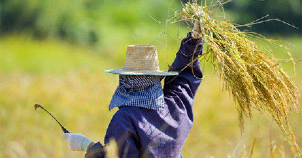 เกษตรกร เงินเยียวเกษตรกร โครงการช่วยเหลือเงินเยียวยาเกษตรกร