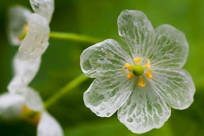 ญี่ปุ่น ดอกไม้ ธรรมชาติ