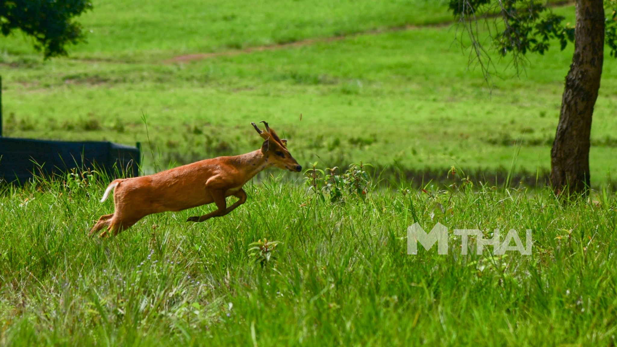 ปล่อยสัตว์ป่า เขตรักษาพันธุ์สัตว์ป่าภูเขียว