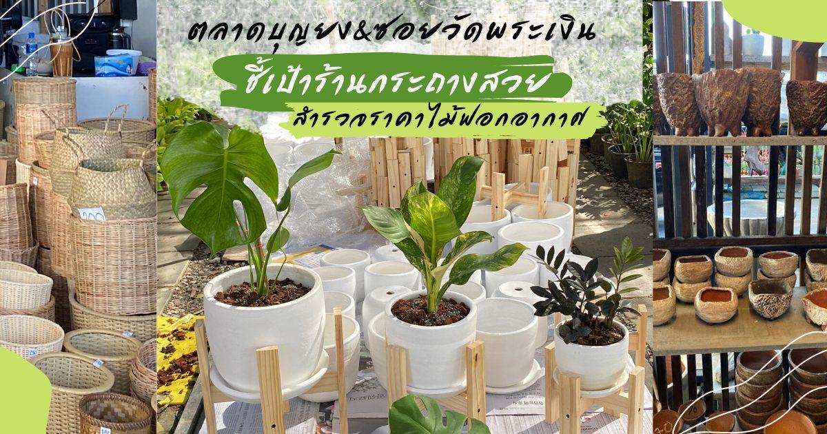 ซอยวัดพระเงิน ต้นไม้ฟอกอากาศ ตลาดต้นไม้ ตลาดบุญยง