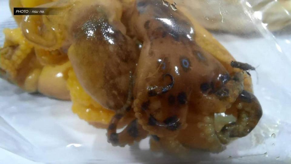 ปลาหมึกมีพิษ ร้านหมึกย่าง หมึกบลูริง