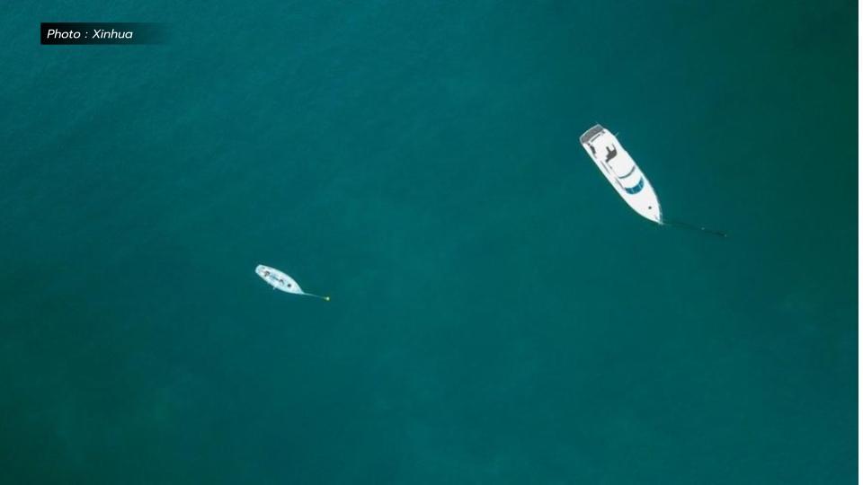 ปลาหมึกบิ๊กฟิน ปลาหมึกยักษ์ ออสเตรเลีย