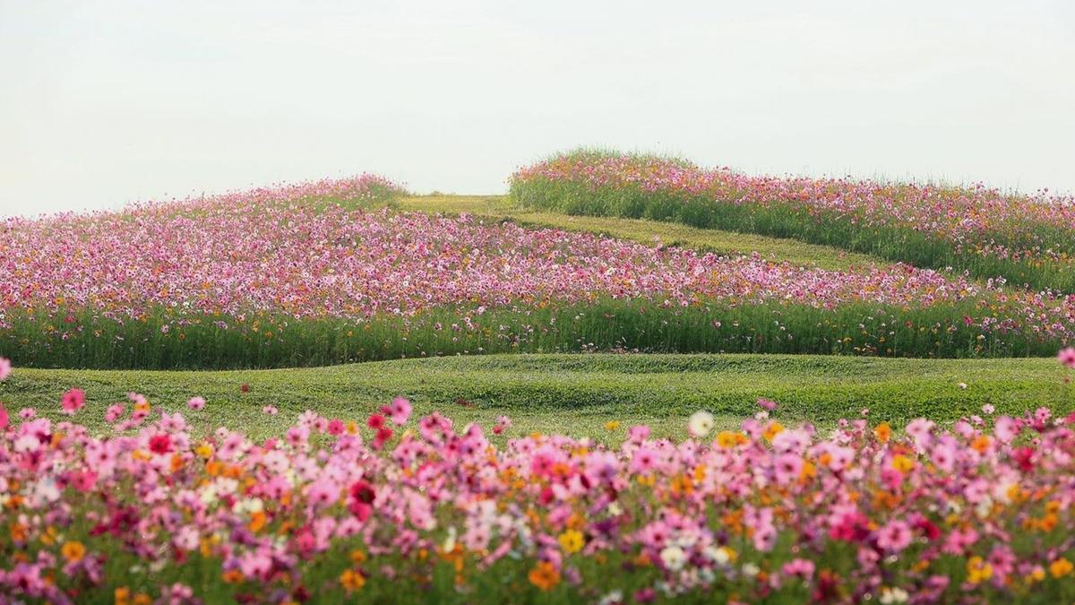 ที่เที่ยวเชียงราย สวนดอกไม้ สิงห์ปาร์ค เชียงราย