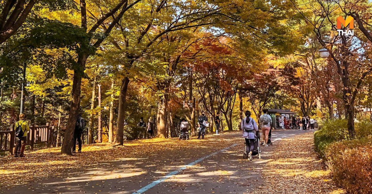 Seoul Grand Park ฤดูใบไม้ร่วง เกาหลีใต้