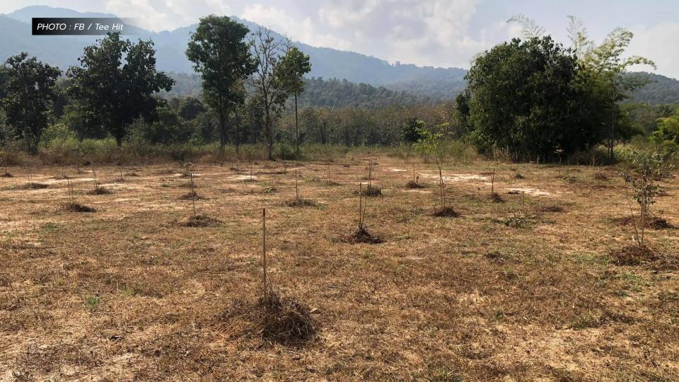 ฌอน บูรณะหิรัญ โครงการปลูกป่า