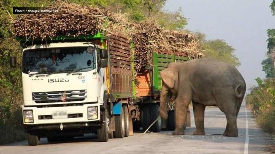 ช้างป่า เขาอ่างฤๅไน