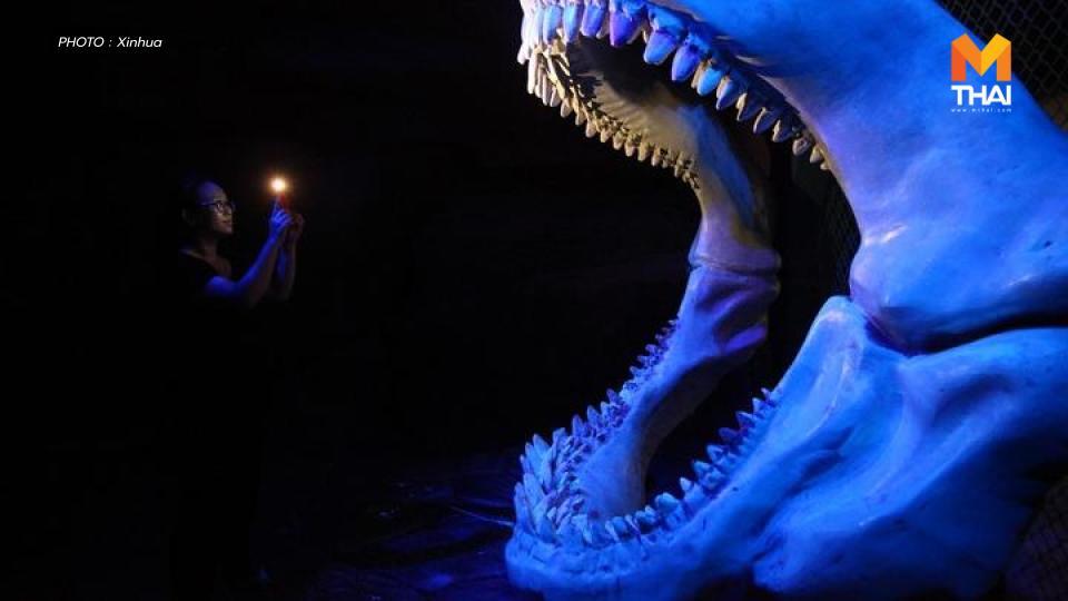 ข่าวต่างประเทศ ประเทศจีน ฟอสซิลฟันฉลาม เมกาโลดอน