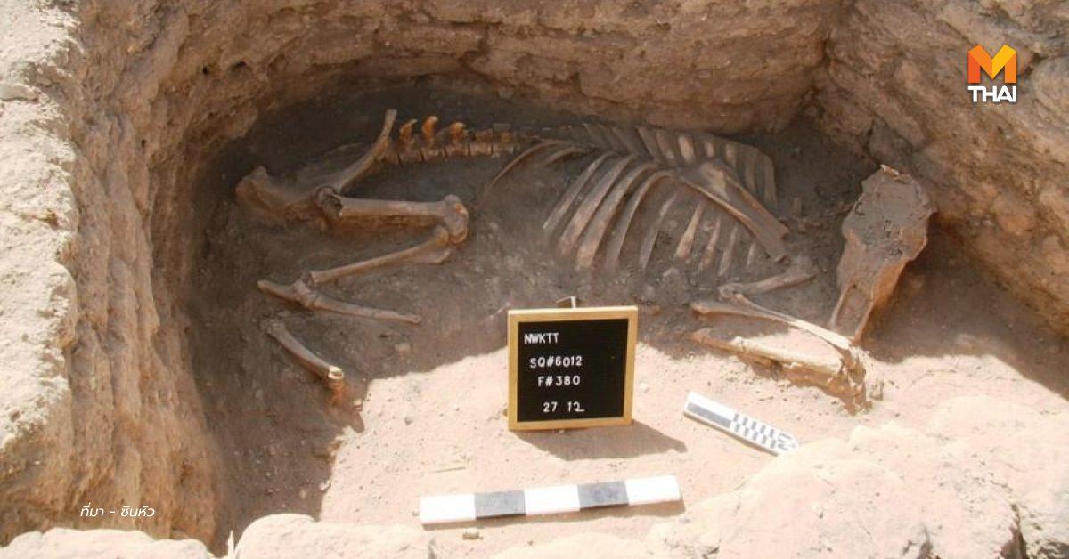 ข่าวต่างประเทศ นครทองคำที่สาบสูญ อียิปต์