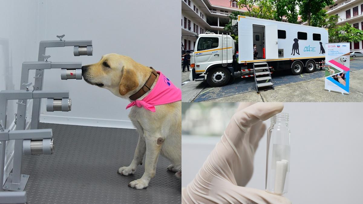 จุฬาลงกรณ์มหาวิทยาลัย รถดมไว สุนัข สุนัขดมกลิ่นหาผู้เชื้อโควิด โควิด-19