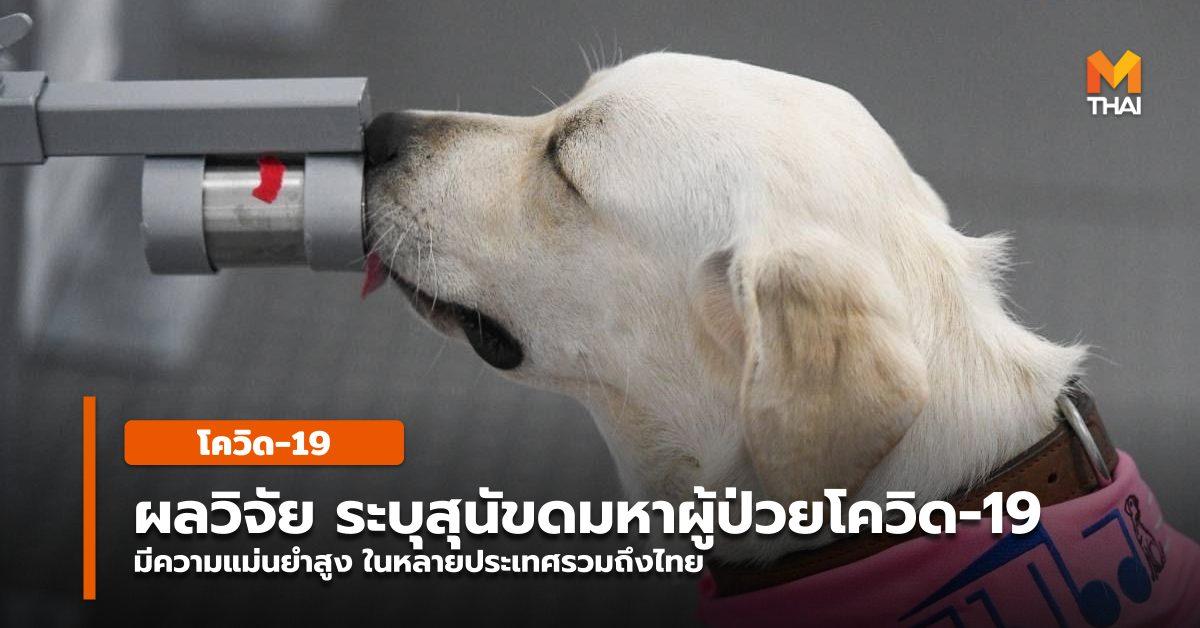 สุนัขดมกลิ่น สุนัขดมกลิ่นหาผู้เชื้อโควิด โควิด-19