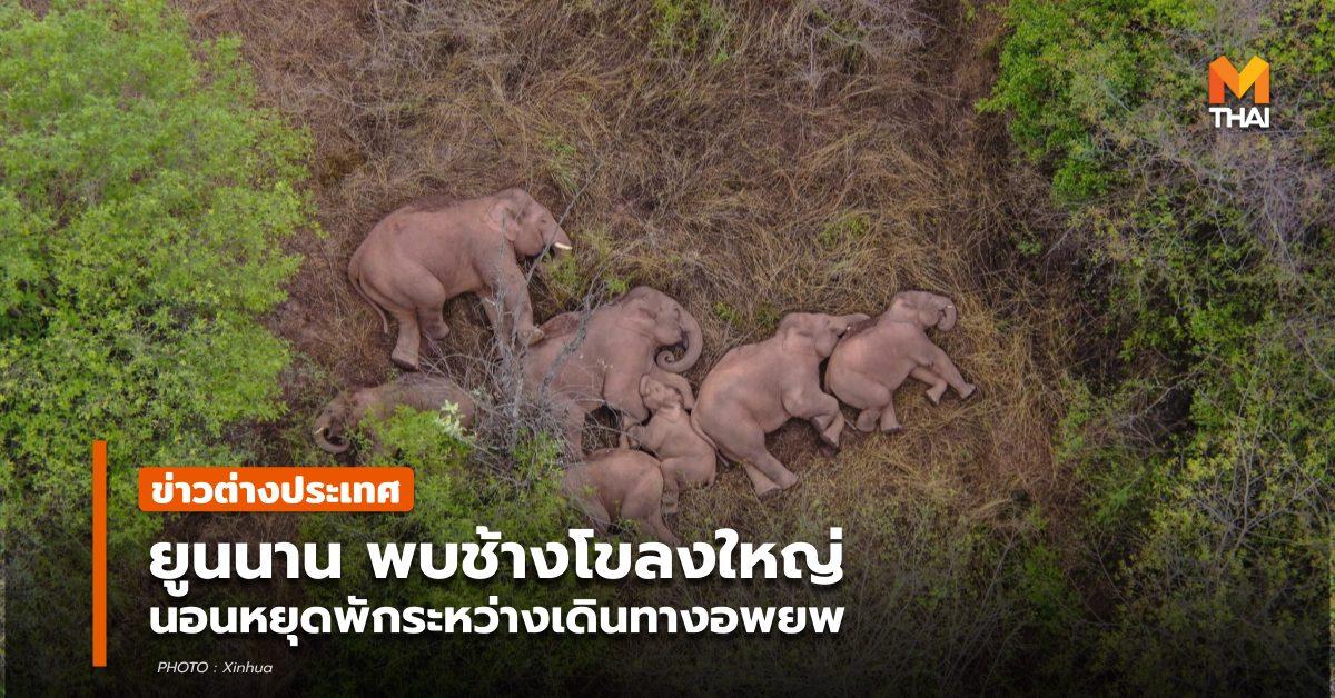 จีน ช้างป่า