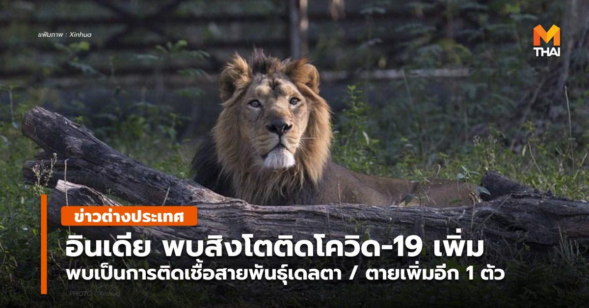 ข่าวต่างประเทศ สิงโต อินเดีย เชื้อสายพันธุ์อินเดีย เชื้อสายพันธุ์เดลตา โควิด-19